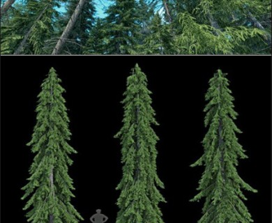 R&D Group - iTrees Vol 4 Fir Trees (1)
