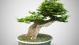 VizPeople - Free Bonsai Trees (3)