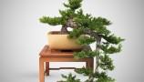 VizPeople - Free Bonsai Trees (5)