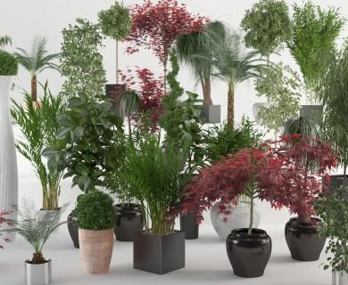 VizPark - Interior Plants for 3DS Max (1)