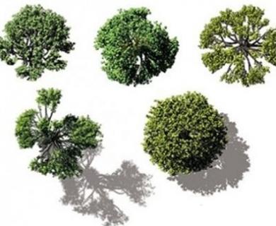 Dosch Design - 2D Viz-Images Bird's Eye Trees (1)