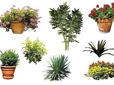 Dosch Design - 2D Viz-Images Plants (1)