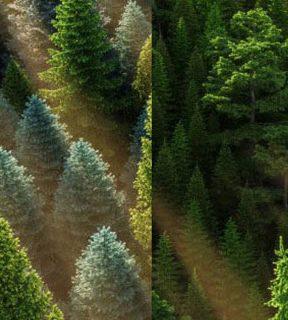 VRAYforC4D - HD Trees Vol 3-5-6 for Cinema4D (2)