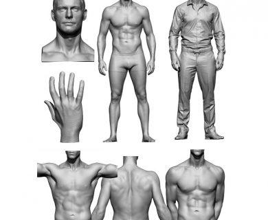 مدل سه بعدی آناتومی بدن مرد