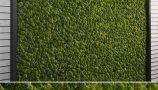 moss-wall-multiscatter-scattering-3d-model_Z