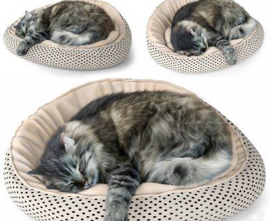 مدل سه بعدی گربه