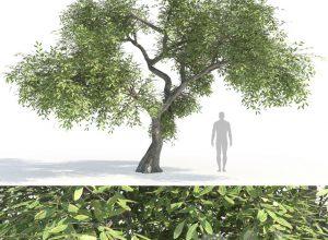 درخت و درختچه